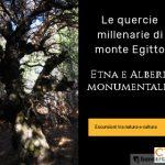 Etna-e-Querce-Millenarie-di-Monte-Egitto2