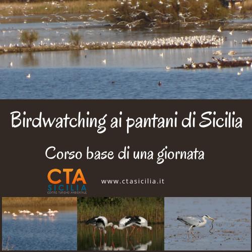 birdwathing-sicilia
